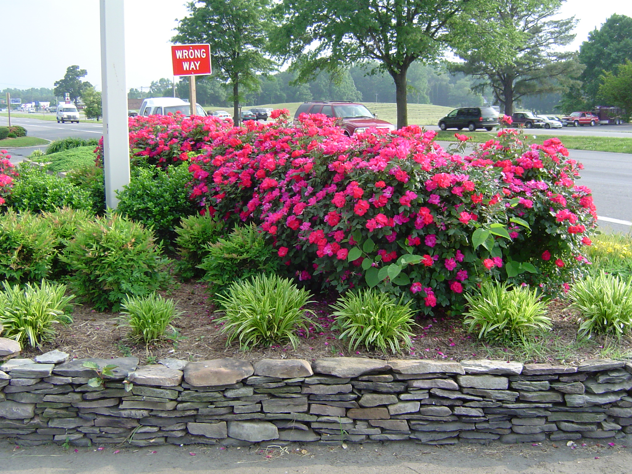 Landscaping Ideas Knockout Roses: Rose garden ideas pictures native ...